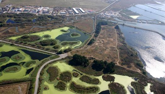 Arcata Marsh.jpg